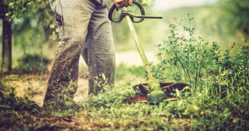 Gardener mows with string trimmer.